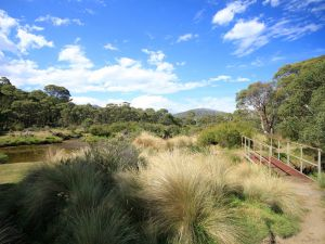 Bullocks walking track - Accommodation BNB