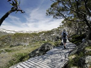 Snow Gums boardwalk - Accommodation BNB