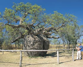 Boab Prison Tree - Accommodation BNB