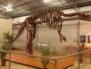 Australia's Dinosaur Trail - Accommodation BNB