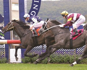 Gosford Race Club - Accommodation BNB