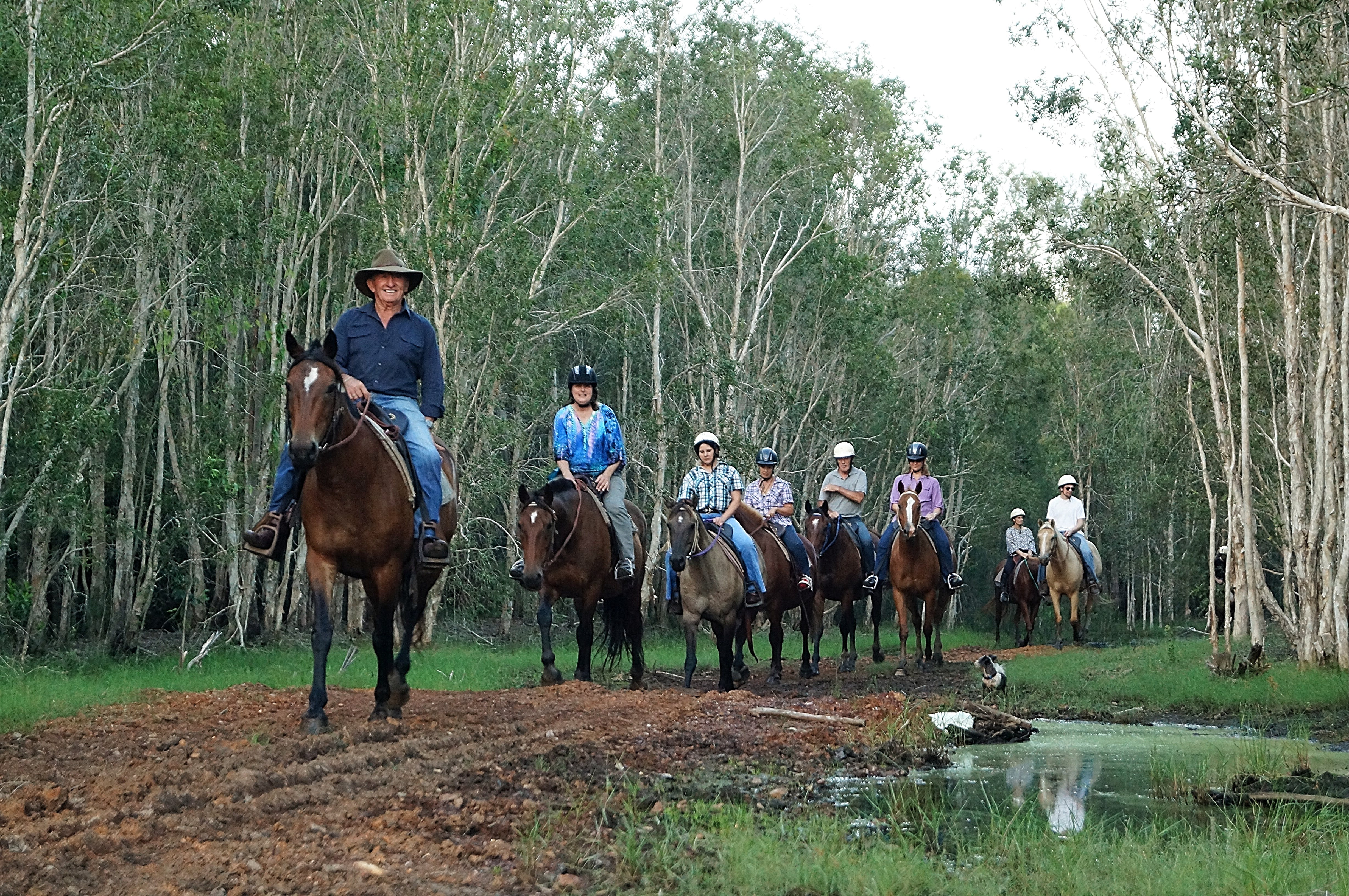 Night Horse Ride and Dinner - Accommodation BNB