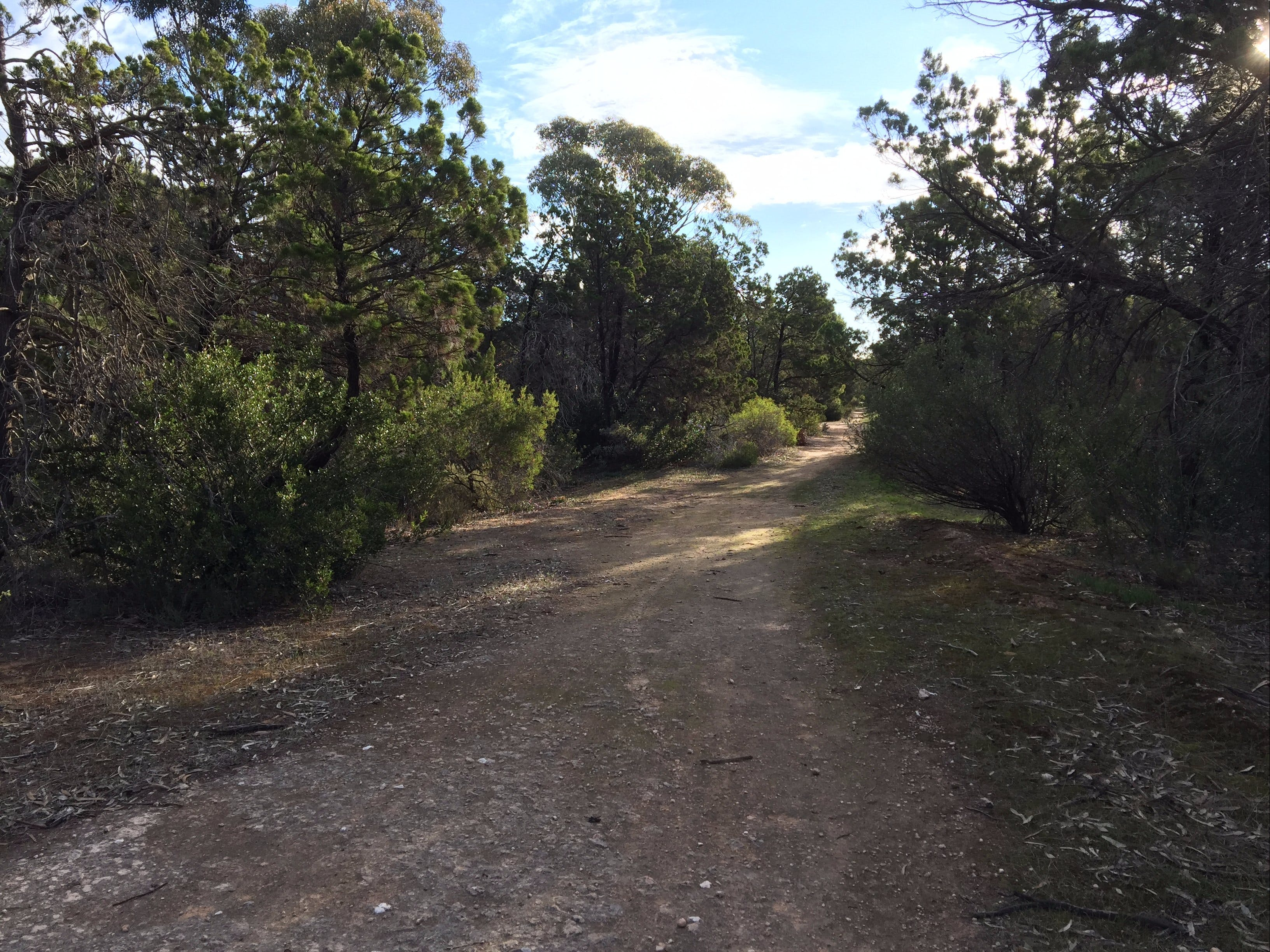 Victoria Park Moonta monthly walks - Accommodation BNB