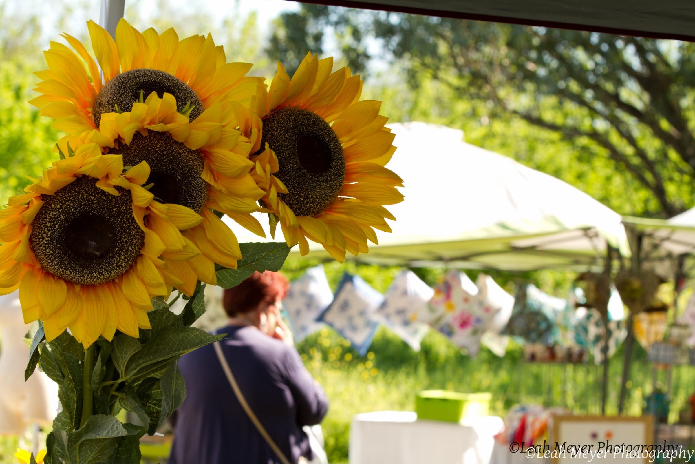 Blackville Arts and Market Day - Accommodation BNB