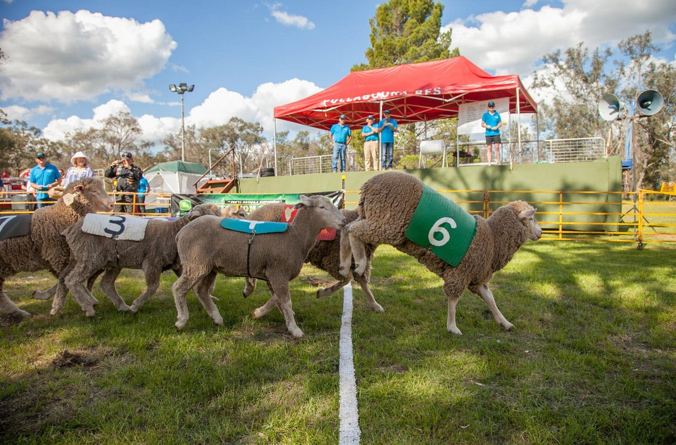 Caragabal Sheep Races - Accommodation BNB