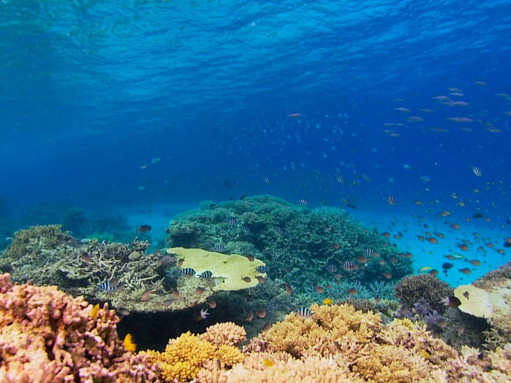 Recovery of the Great Barrier Reef - Accommodation BNB