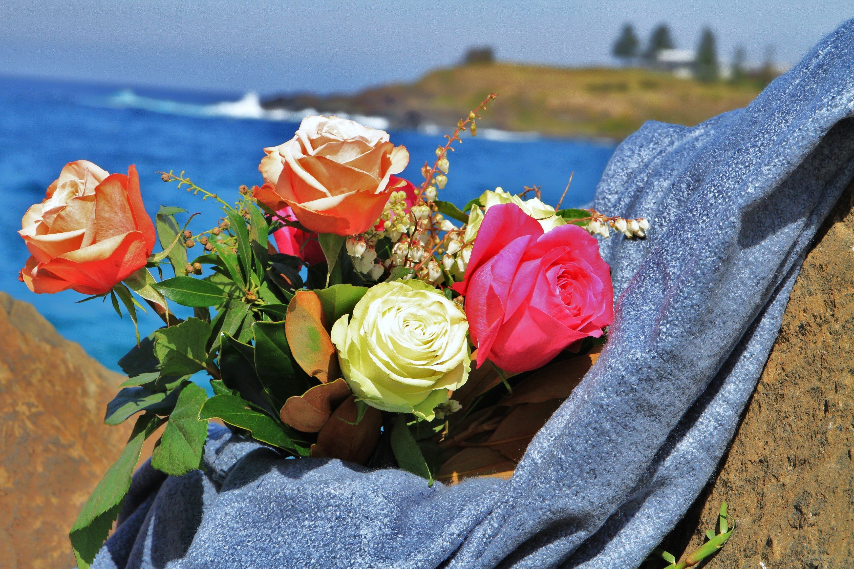 Roses by the Seaside National Rose Championships and Conference - Accommodation BNB