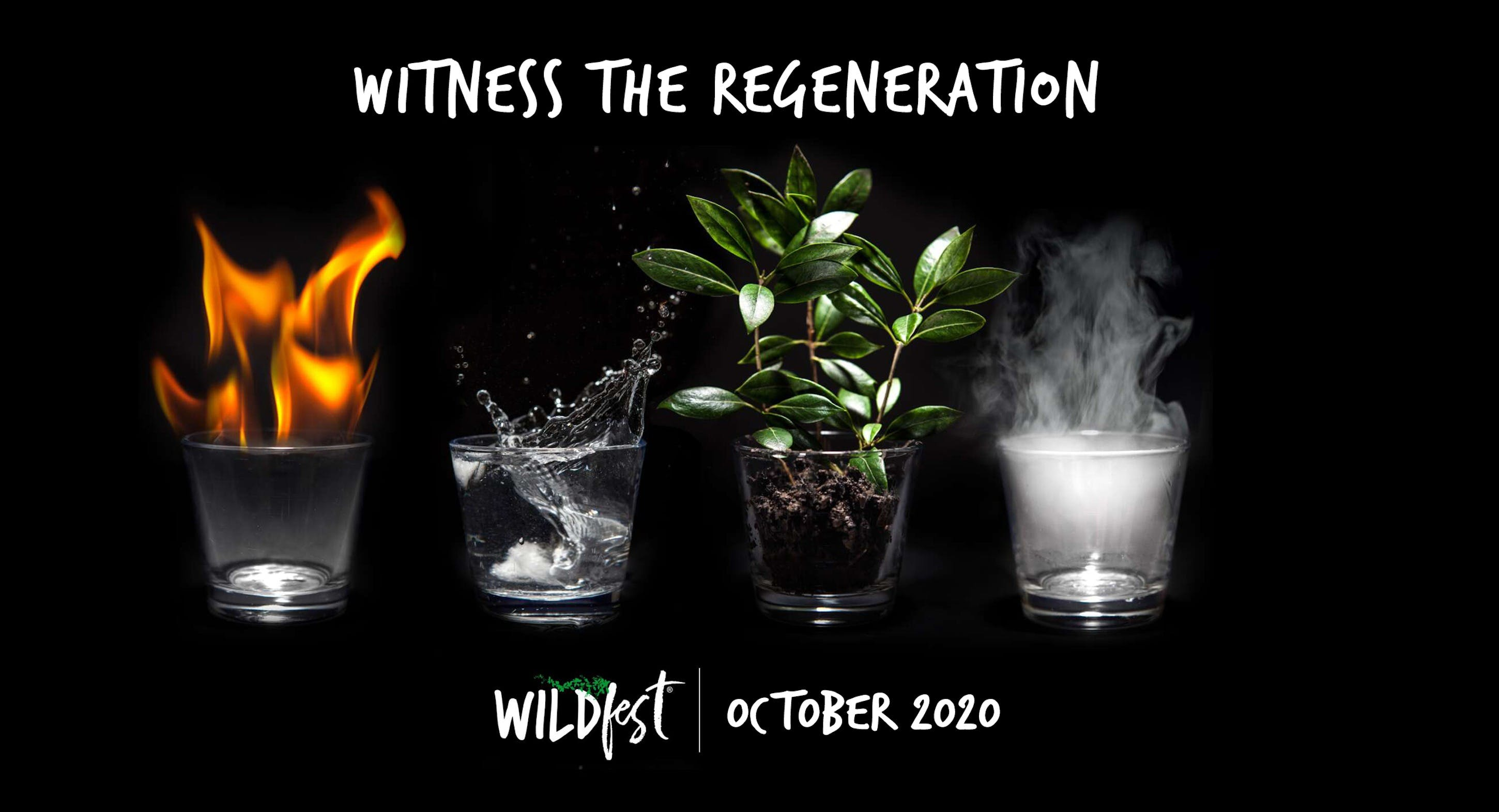 Wildfest - Annual Festival - Accommodation BNB