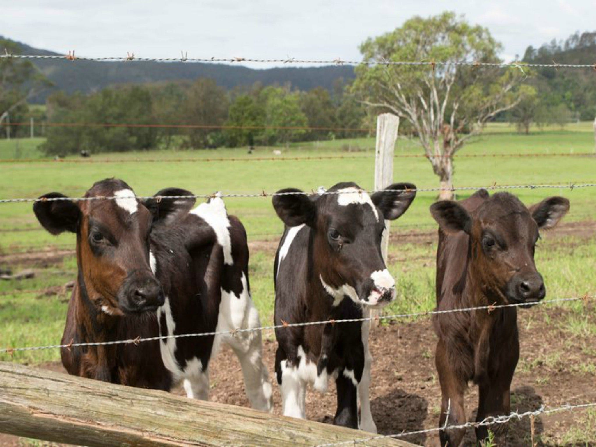 Bandon Grove Farm Tours - Accommodation BNB