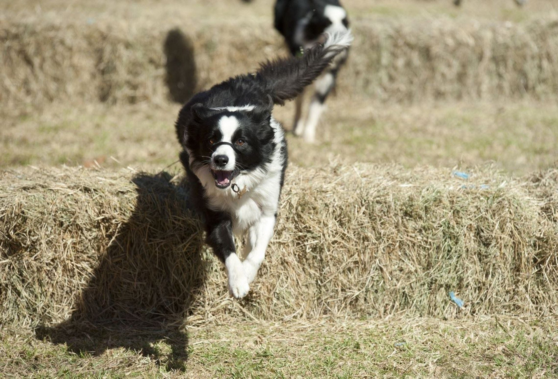 Great Nundle Dog Race - Accommodation BNB