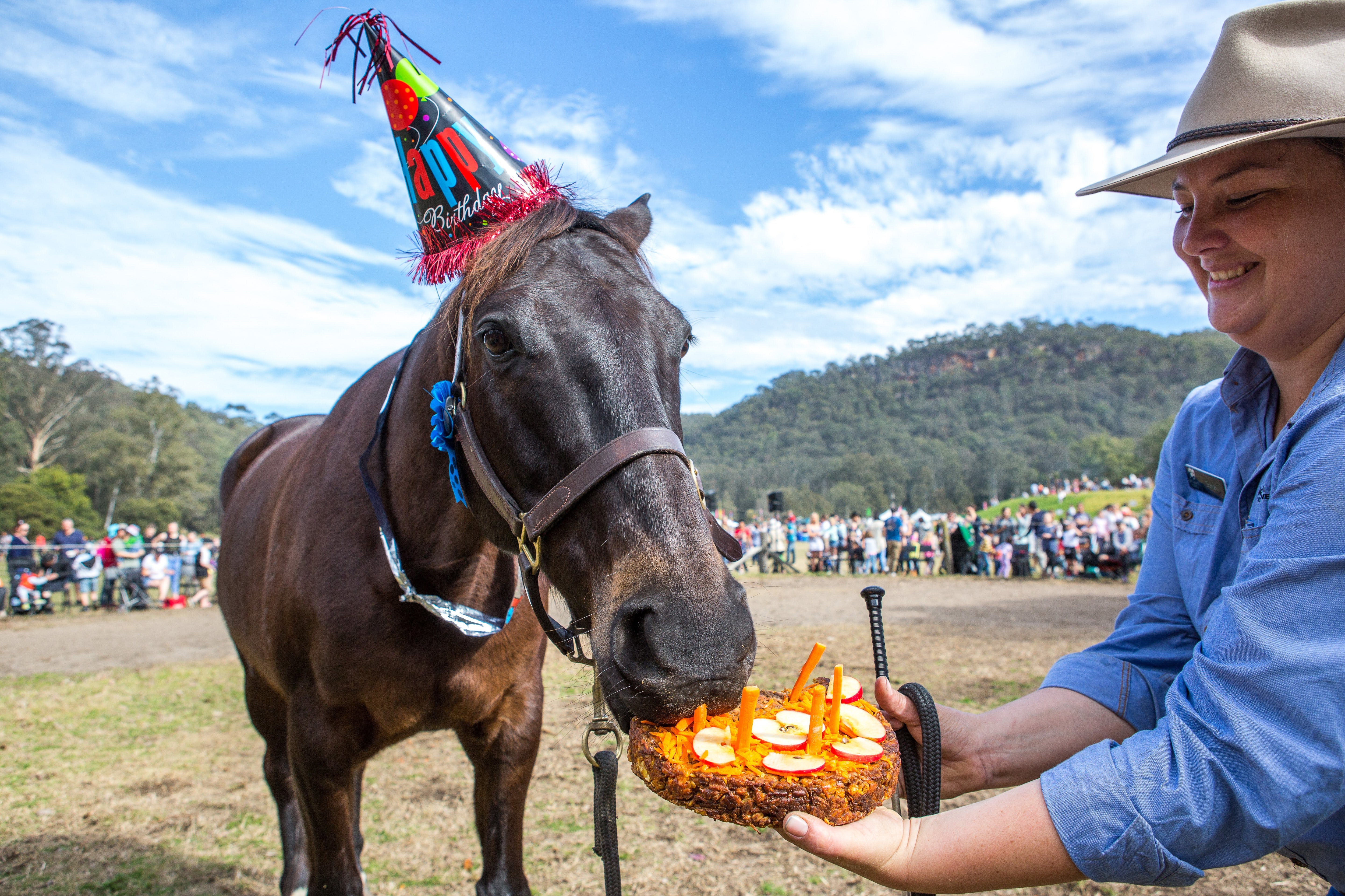 Horses Birthday Festival - Accommodation BNB