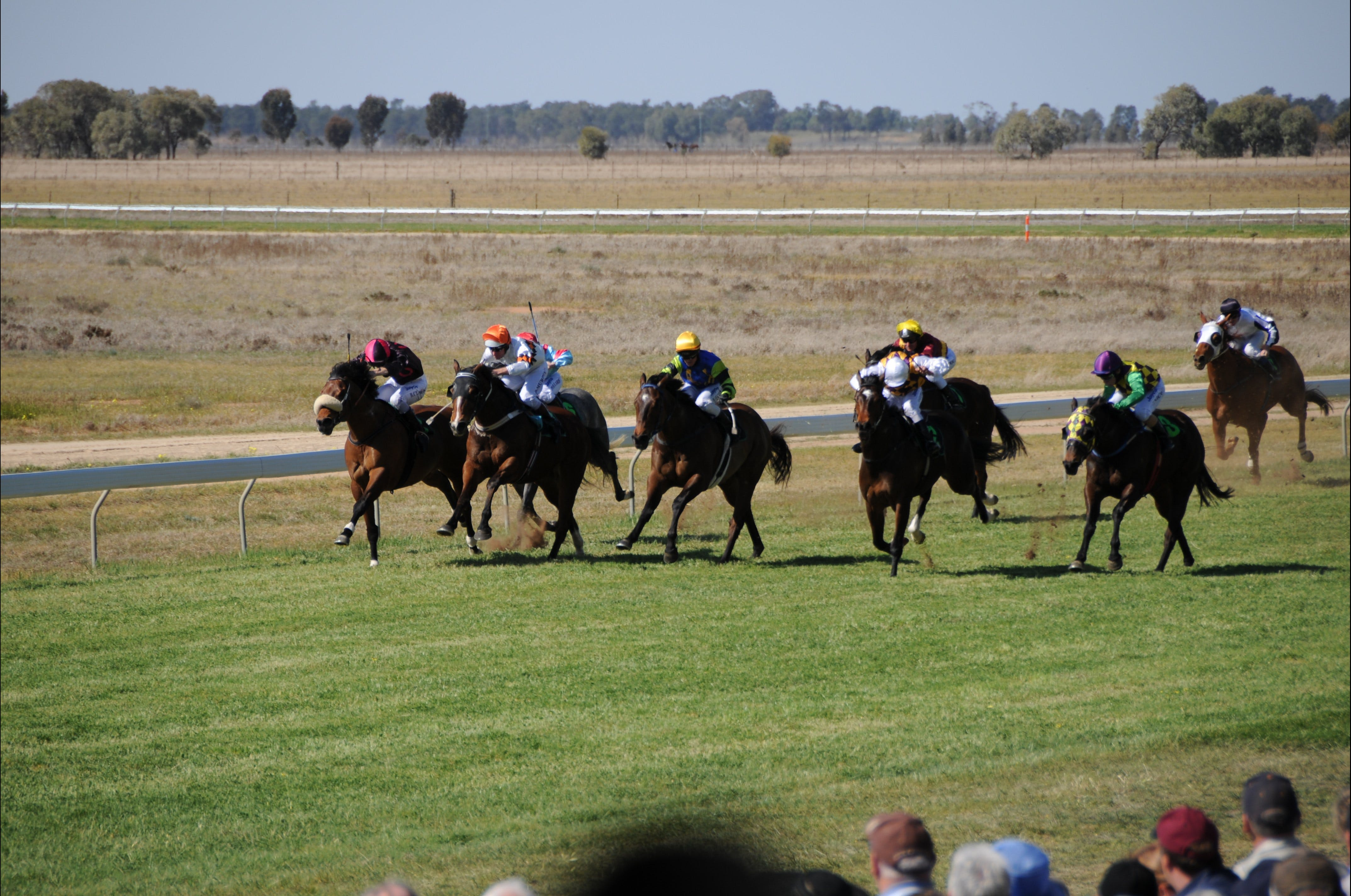 Jerilderie Gold Cup Races - Accommodation BNB