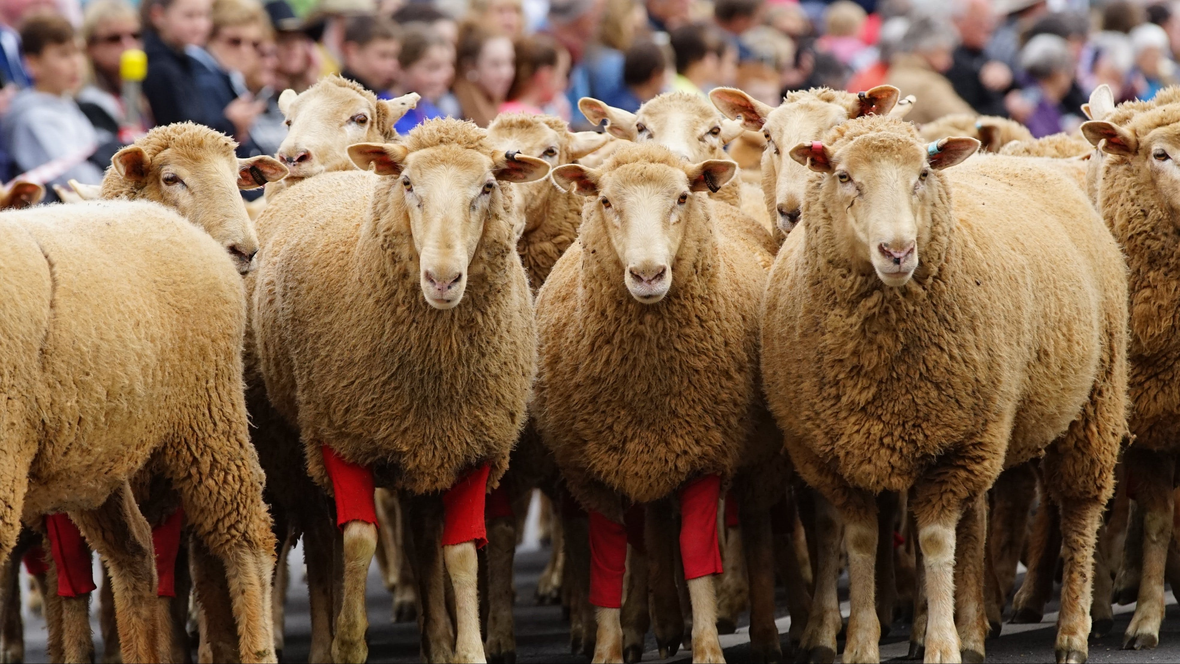 Rosto Merriwa Festival of the Fleeces - Accommodation BNB