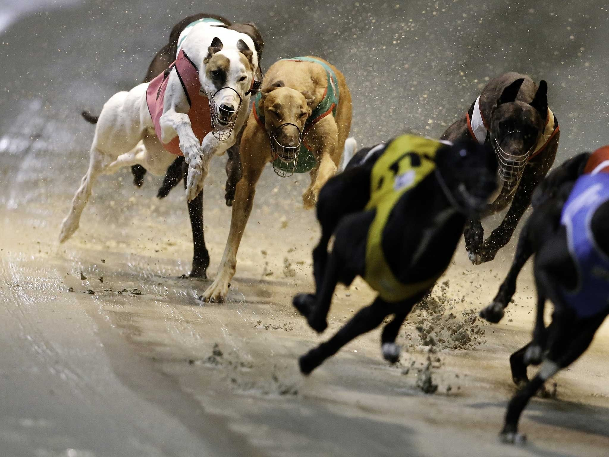 Twilight Greyhound Racing - Accommodation BNB