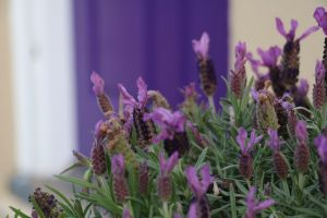 The Purple Door on Seaview - Accommodation BNB