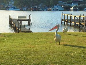 Riverfront Getaway - Mannum - Accommodation BNB